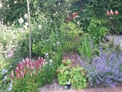 tuin-nieuwkoop-aan-de-sloot-foto-2