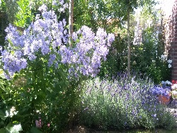 tuin-oegstgeest-foto-1