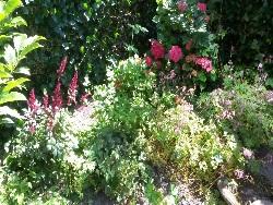 tuin-oegstgeest-foto-3