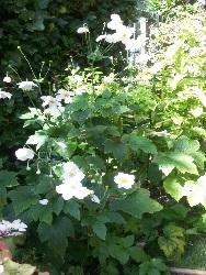 tuin-oegstgeest-foto-5